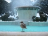 mission-bay-fountain-and-bird