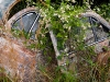 Nature makes a home of Rusty Car