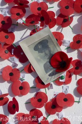 anzac-day-poppies2