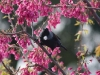 tui-in-cherry-tree2
