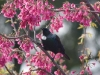 tui-in-cherry-tree5