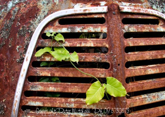 rusty-grill-and-leaf