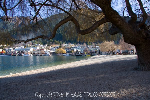 Tree on Queenstown Lake Front